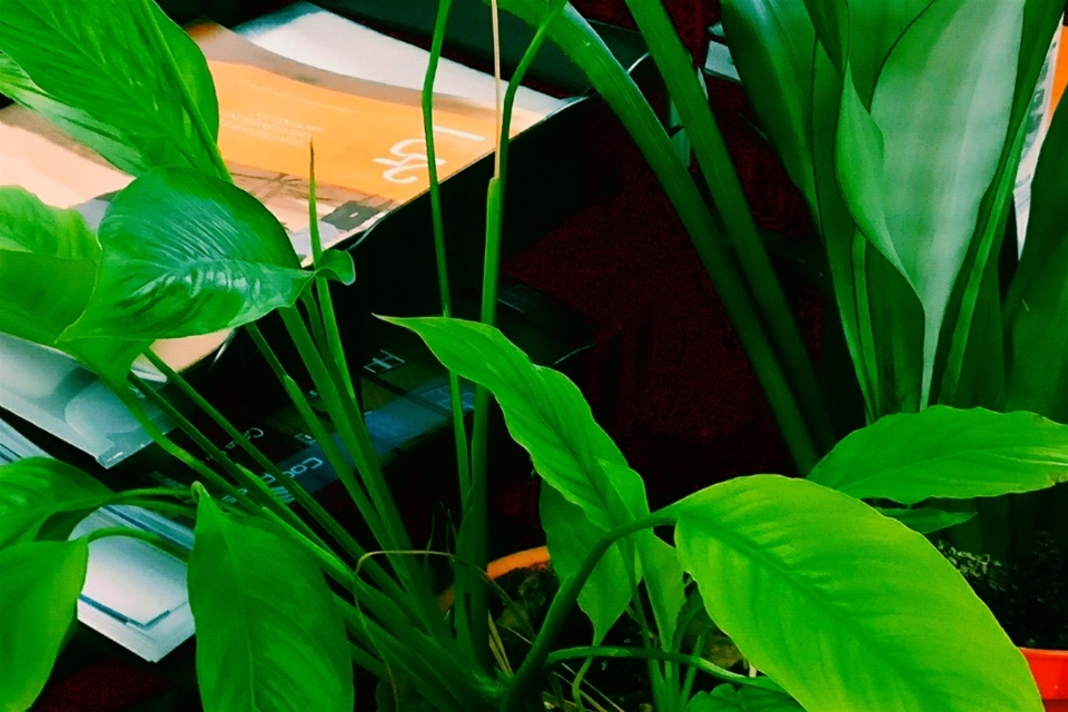How to improve your office environment with biophilia?